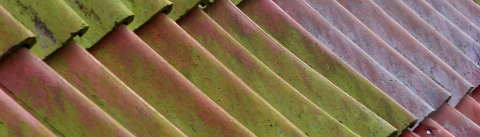 Dauerhaft Grünbelag entfernen lassen - Dachbeschcihtung